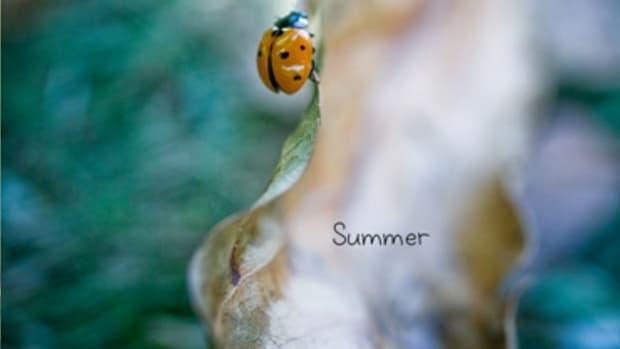 averybinder_summer_traceyclark_Cover