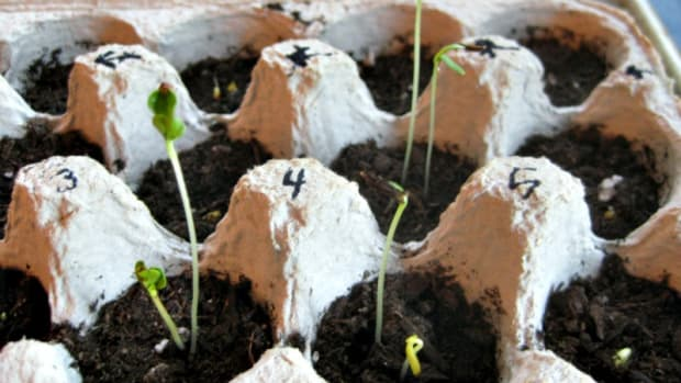 Earth Day Activities for Kids - Plant a Seed