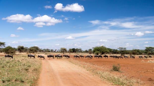 1-serengeti