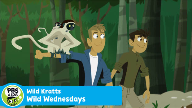 Wild Kratts Wild Wednesdays_THUMBNAIL_All This Month 30