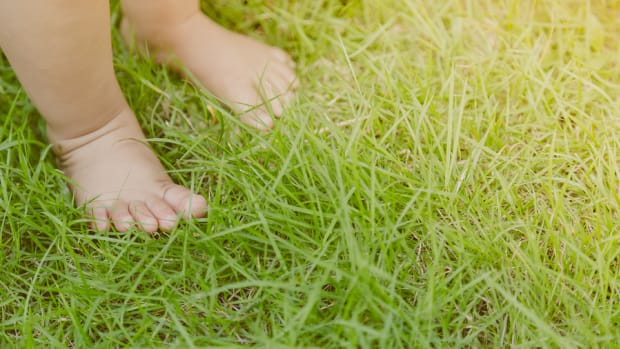 Baby feet in grass ( Filtered image processed vintage effect. )