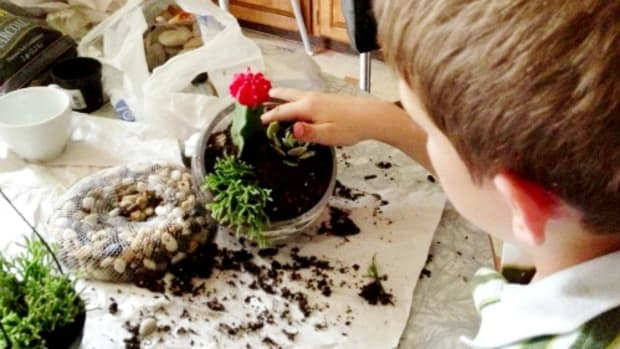 Placing the plants in the terrarium