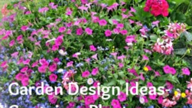 Garden Design Ideas - Container Plants-Featured