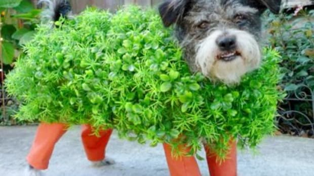 diy dog costumes chia pet