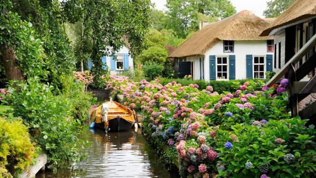 Giethoorn Village Hydrangeas