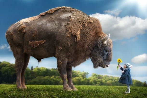Little-Girl-Big-Buffalo