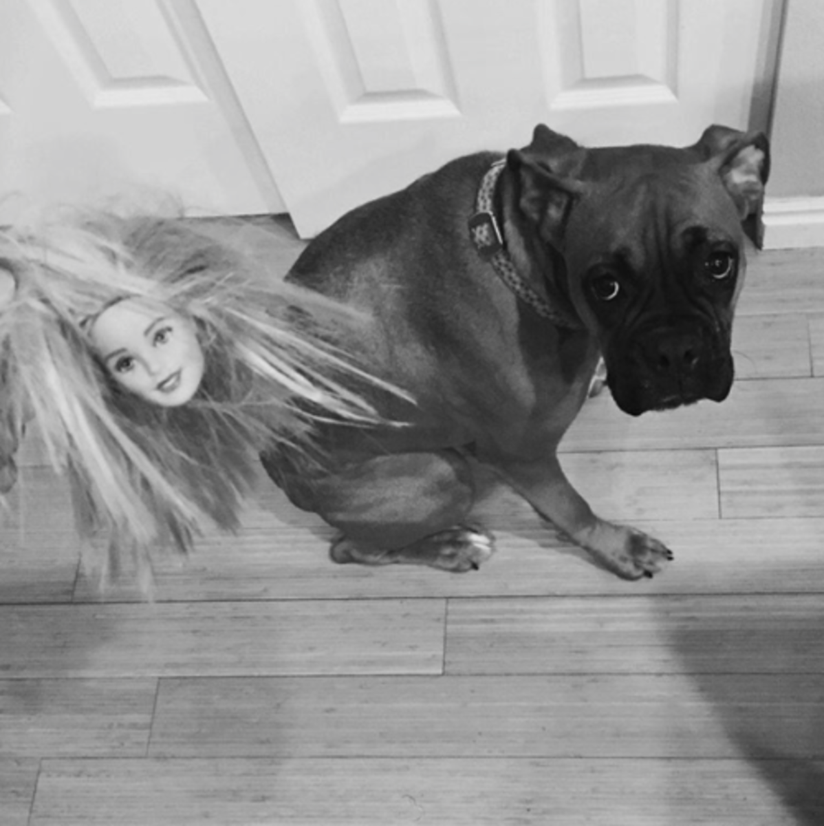 16 LIfe Lessons I Learned From My Dogs