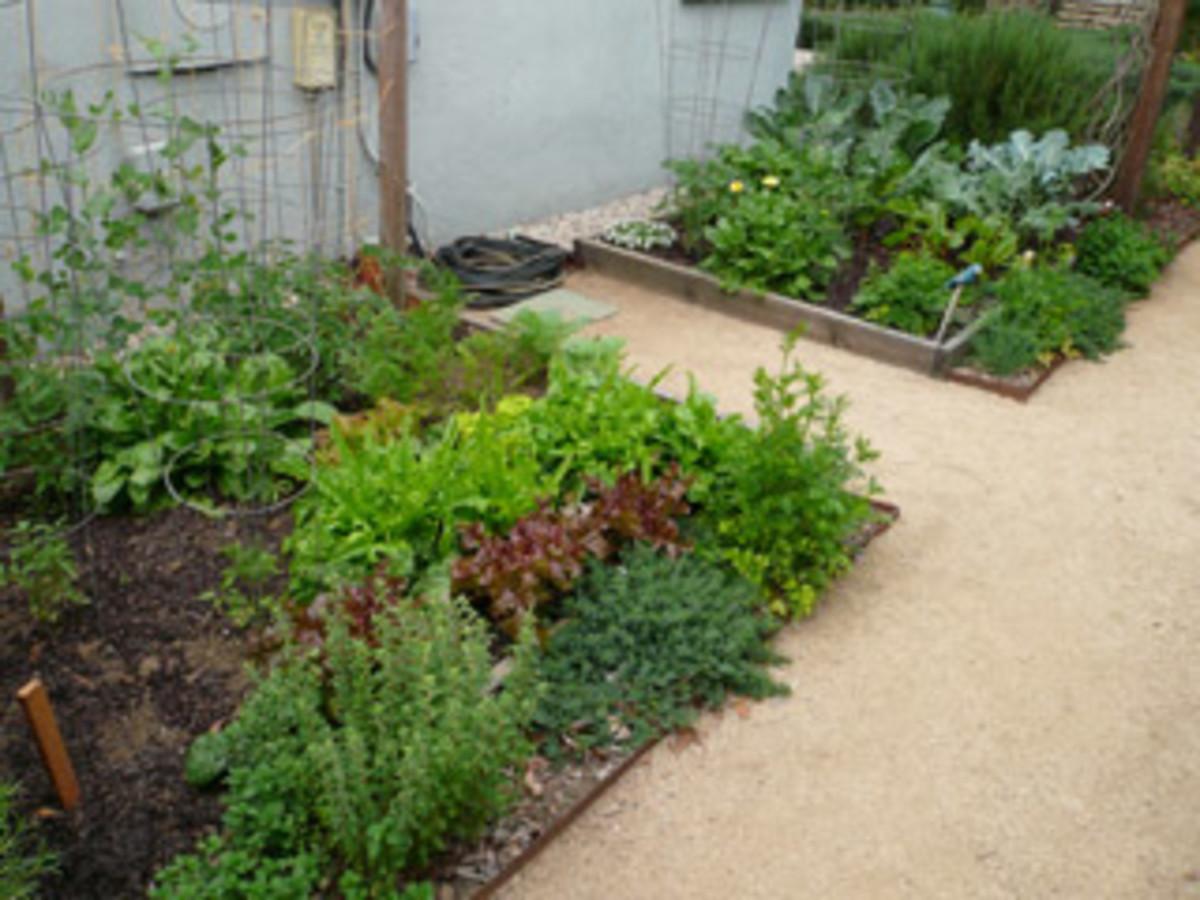 small_garden