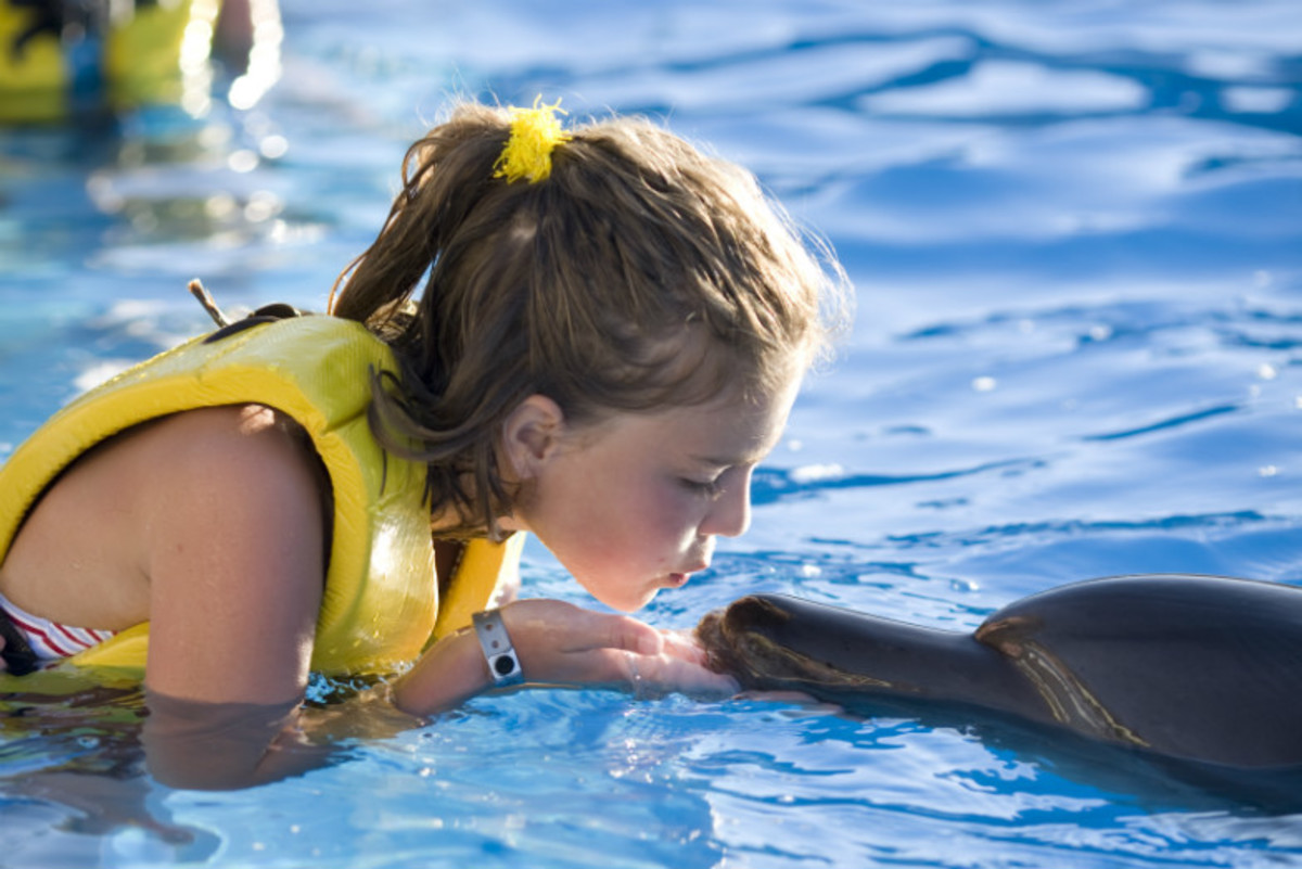 Swim-with-Dolphins-for-Free-with-These-Awesome-Offers-379fedc35554431bb7594a8ab73edc0f