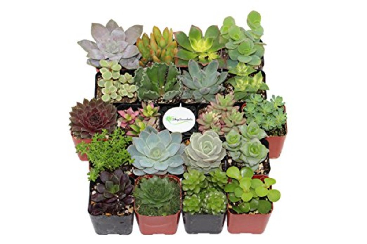 must-buy-gift-gift-list-succulents