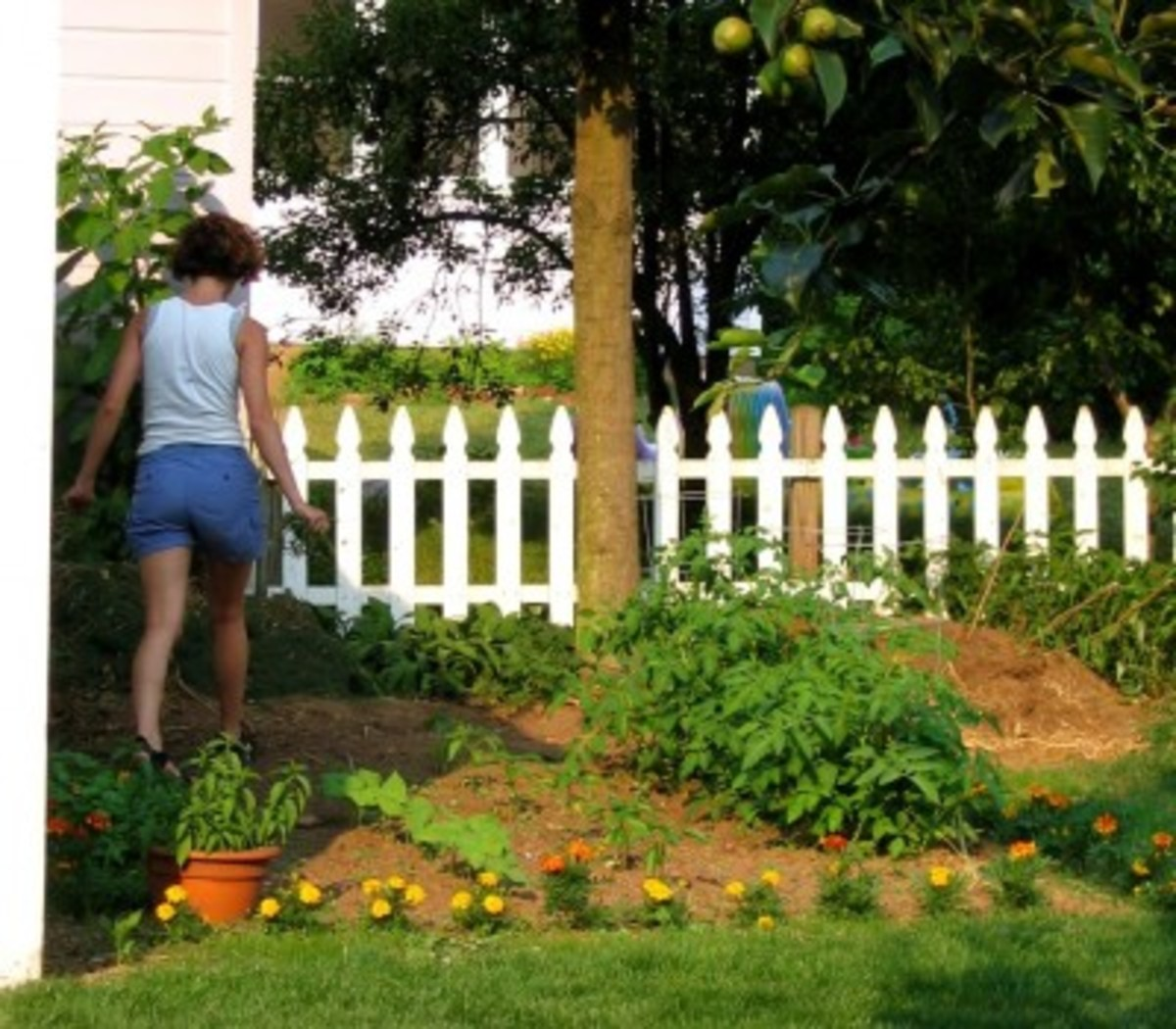 Our yard in Connecticut was only 0.12 acres, so my garden was, like, 0.012 acres. Space was precious.