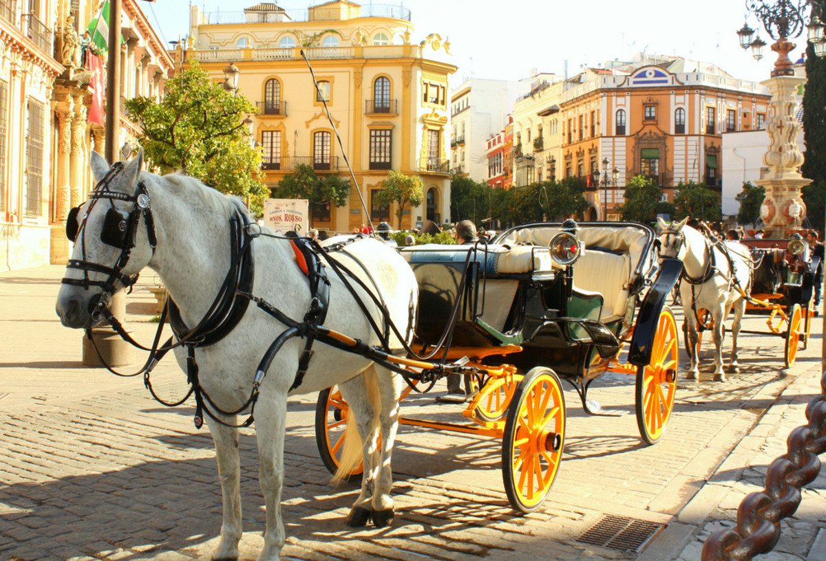 Horses and carriages at Plaza Virgen de los Reyes (Flickr: Jess R.)