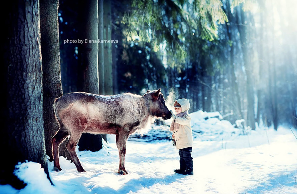 Child with reindeer photographed in the woods