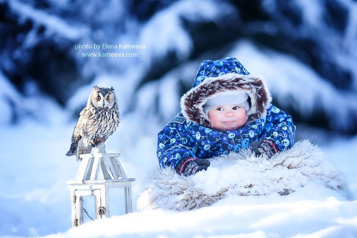 Owl and baby in the winter