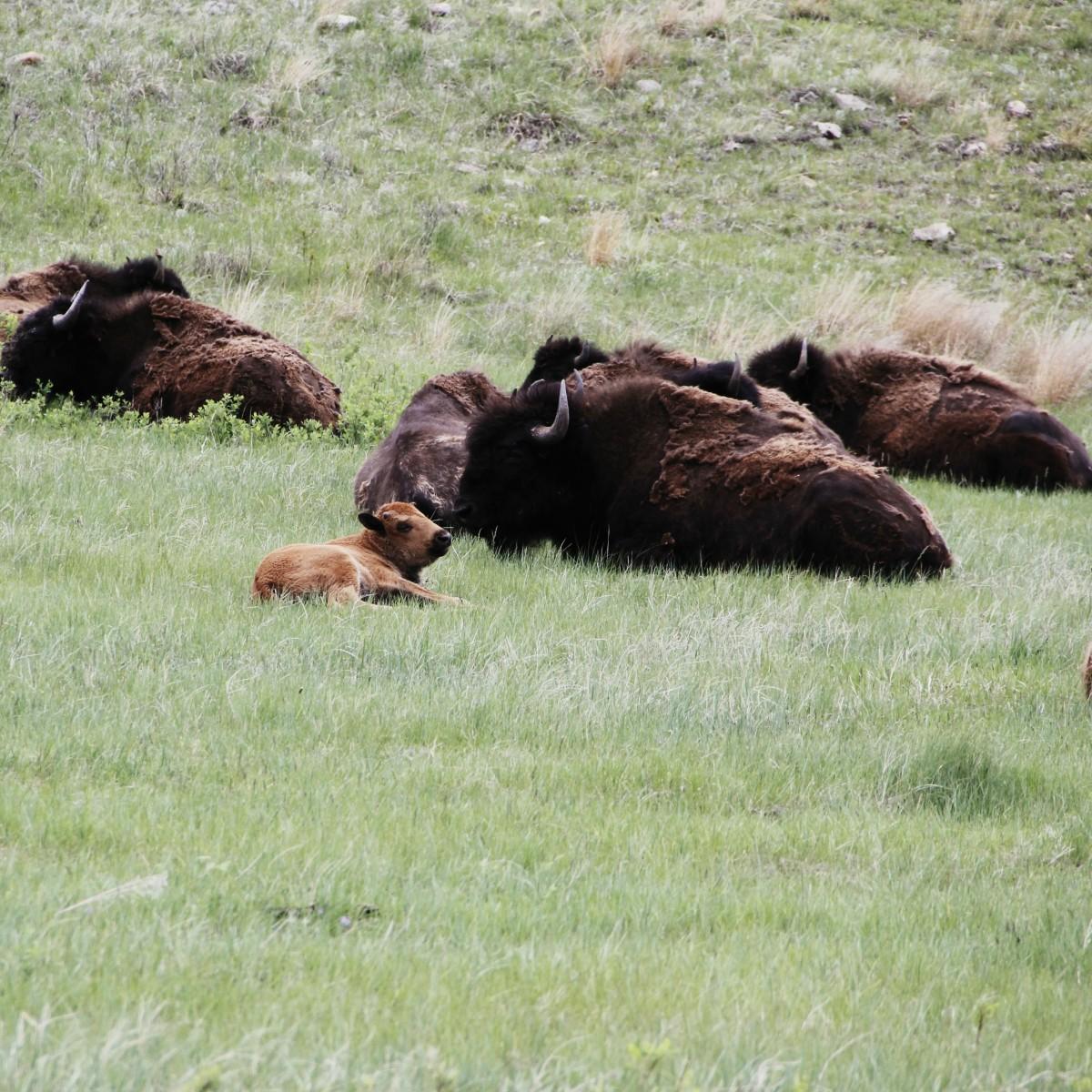 South Dakota Road Trip Custer State Park