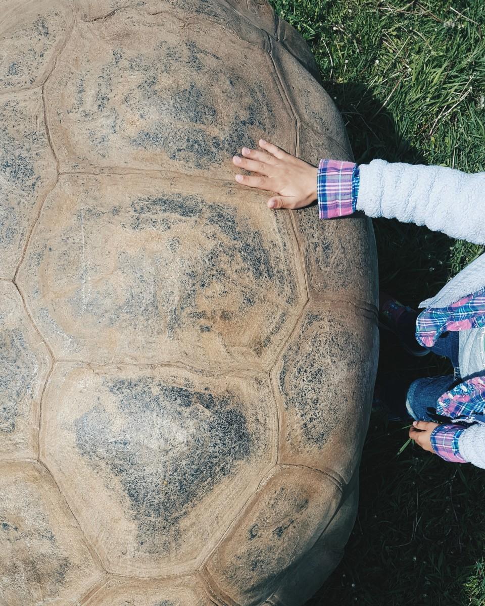 Reptile Gardens South Dakota Family Road Trip