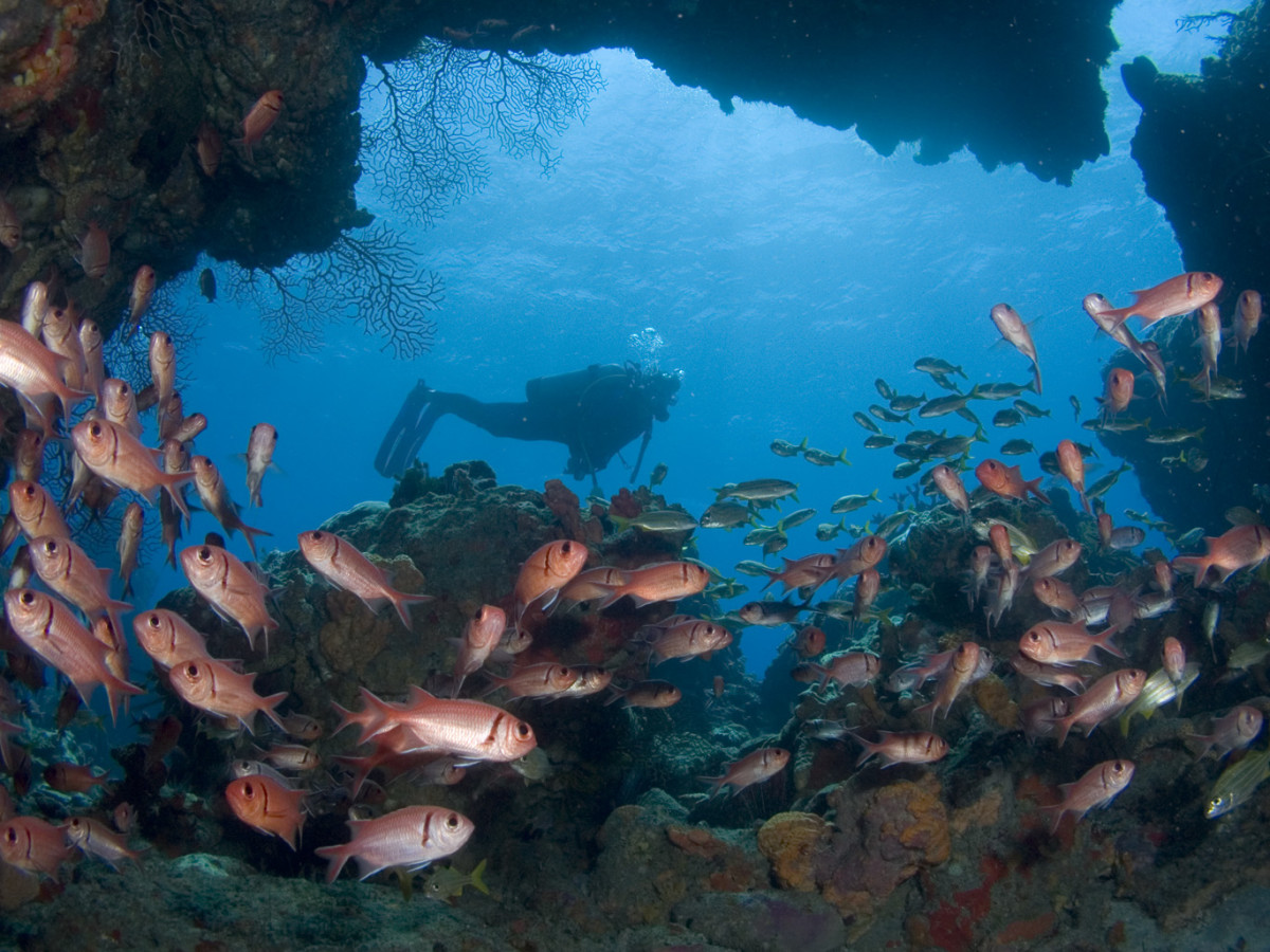 This year, visit Dominica and enjoy its amazing scuba diving opportunities. (Discover Dominica Authority)