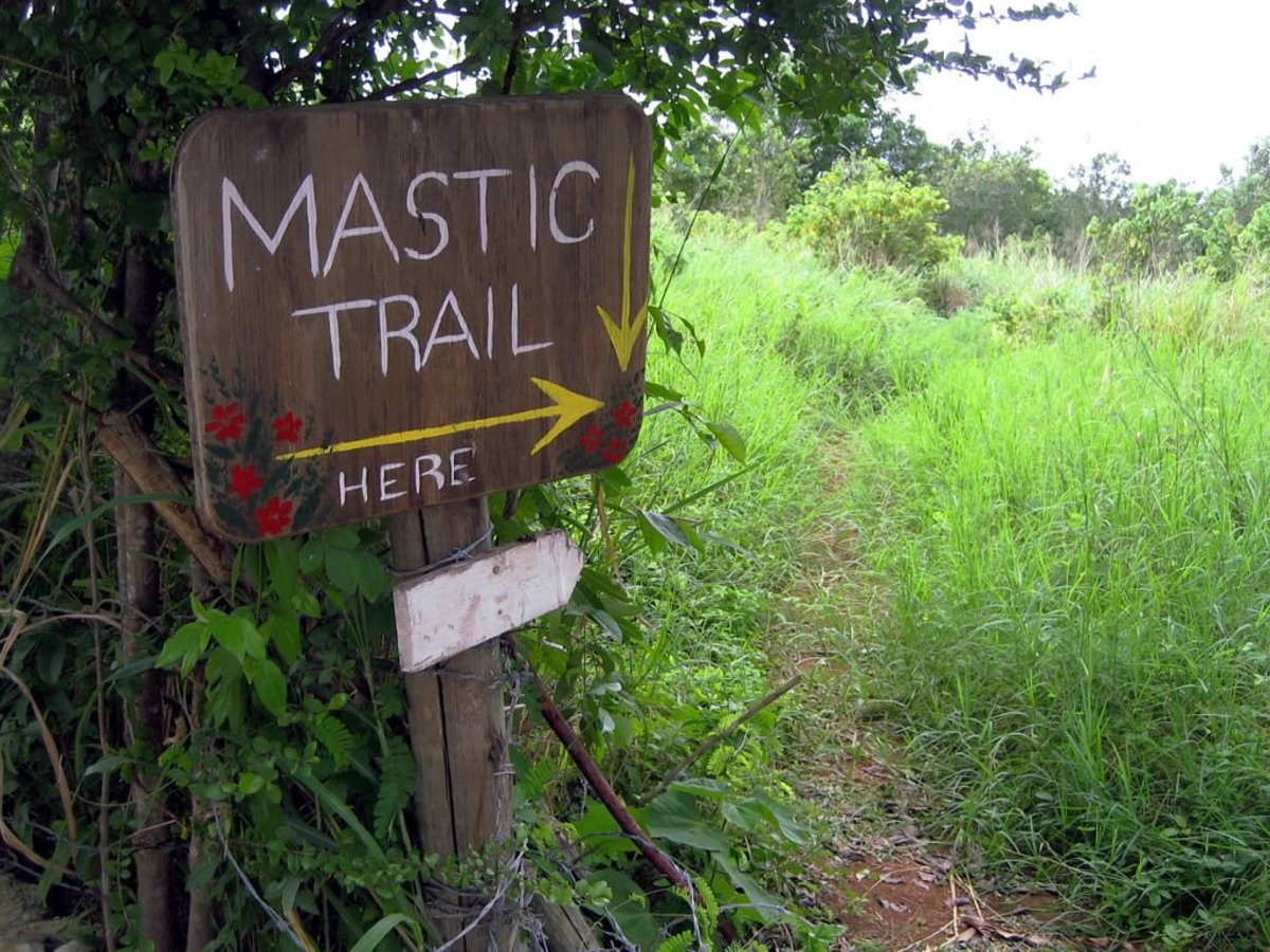 The Mastic Trail crosses eastern Grand Cayman in the Cayman Islands, Caribbean. (Flickr: David Stanley)