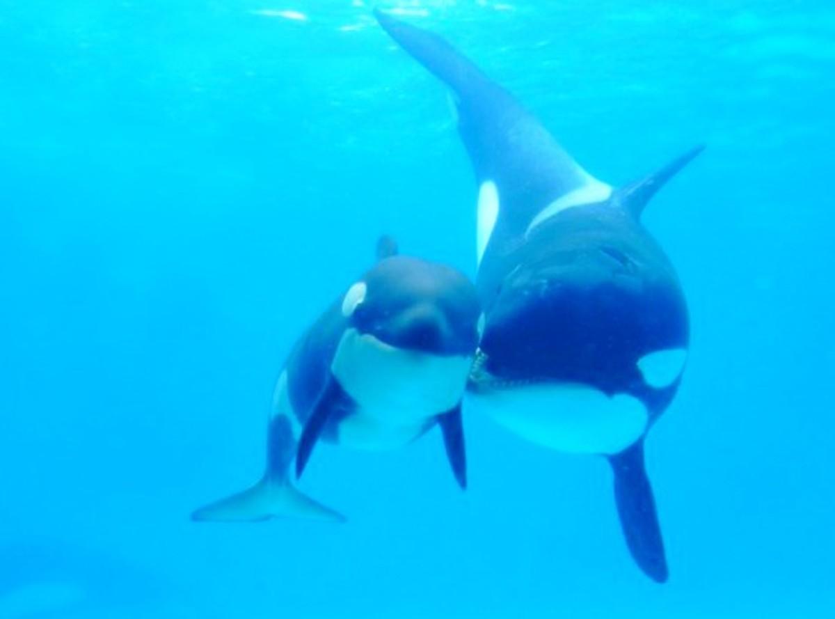 blackfish movie and moms