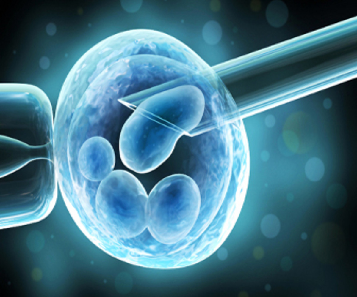 Moms Are Turning To IVF In Record Numbers www.TodaysMama.com #IVF