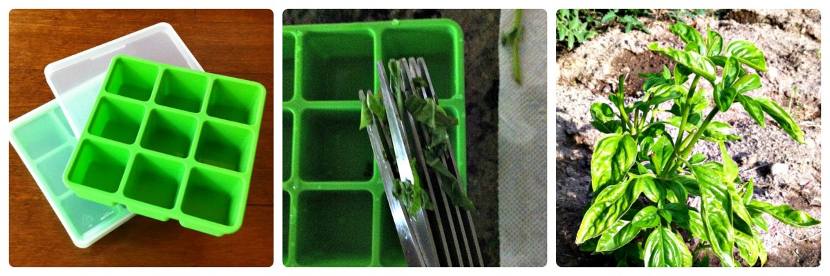 How to Freeze Basil - TodaysMama.com