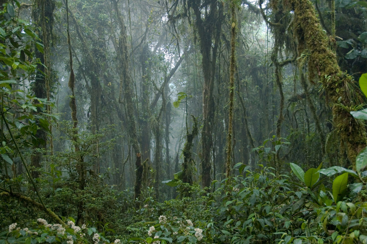 Monteverde Cloud Forest (Flickr: travelmag.com)
