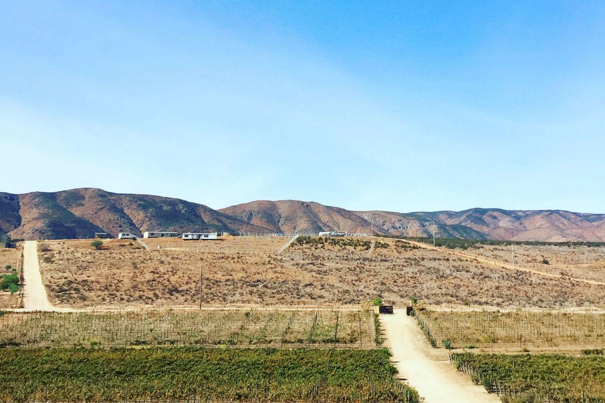 Valle de Guadalupe (Photo: Michelle Rae Uy)