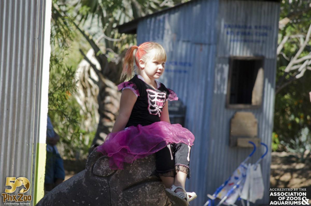 Boo-Zoos-Go-Wild-for-Halloween-2518eb751a9e4db9bc8e03ad1b8a9833