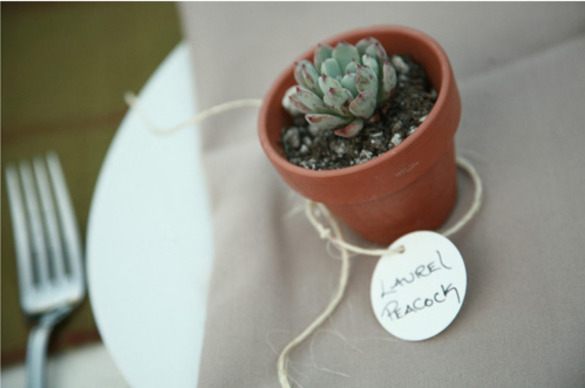 cactus in pot with twine dinner place card setting