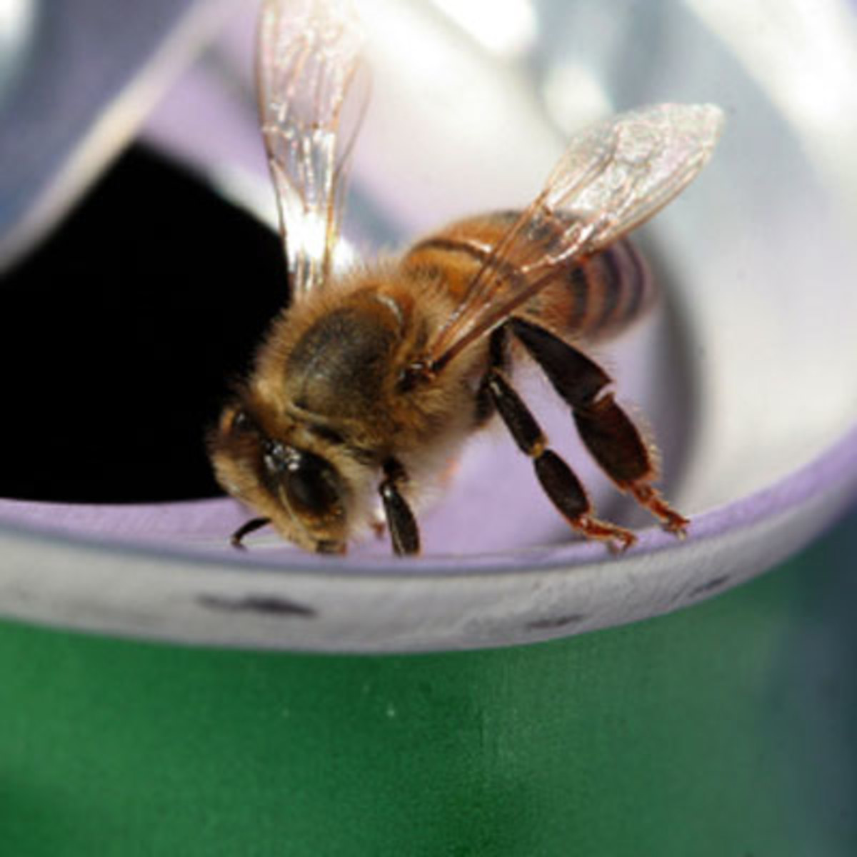 Summer Safety Tips for Kids - Bee Stings