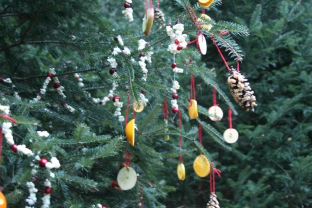 birdfoodtree