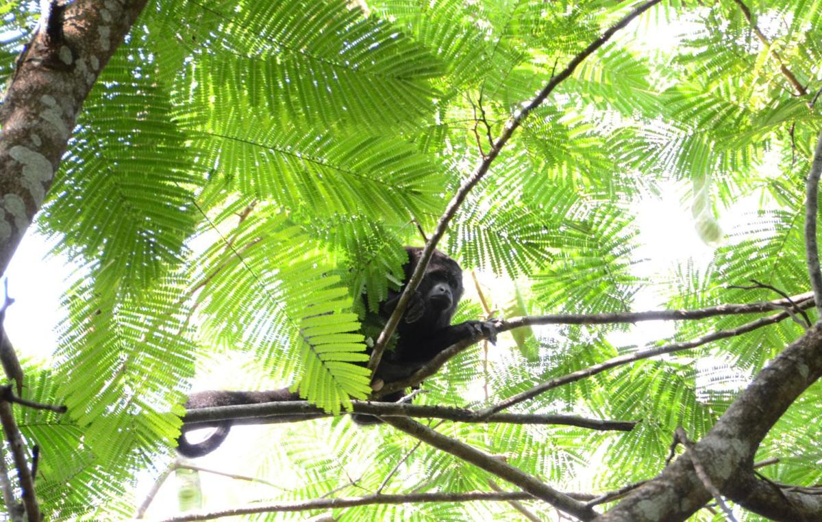 See monkeys in Guatemala (Courtesy Las Lagunas Boutique)