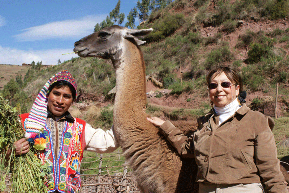 Make friends with guanacos in Cusco (Courtesy Awana Kancha)