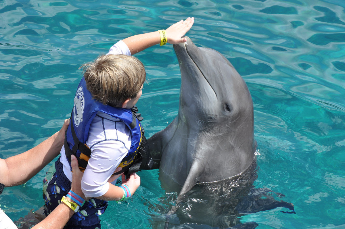 Swimming with dolphins: good or bad? (Flickr: Josh Grenier)