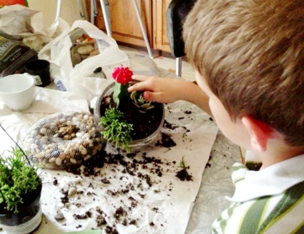 Placing the plants in the terrarium