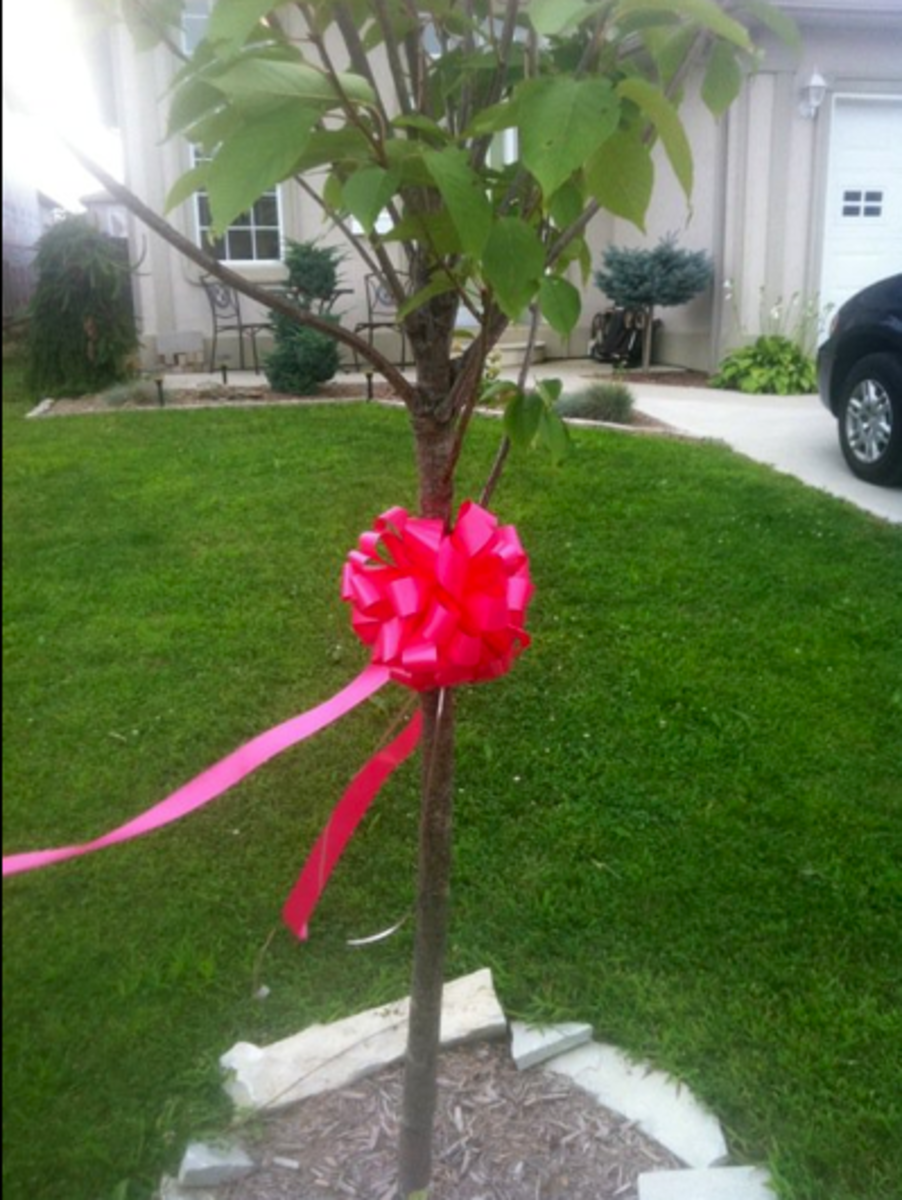 Pink ribbons are being displayed all over Andrea's home town and in Canada, Philadelphia, California and many other places.  Rock a pink ribbon at your house!