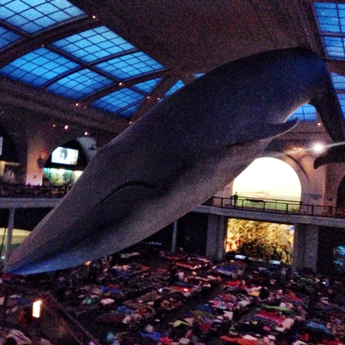 Big Blue Whale at American Museum of Natural History