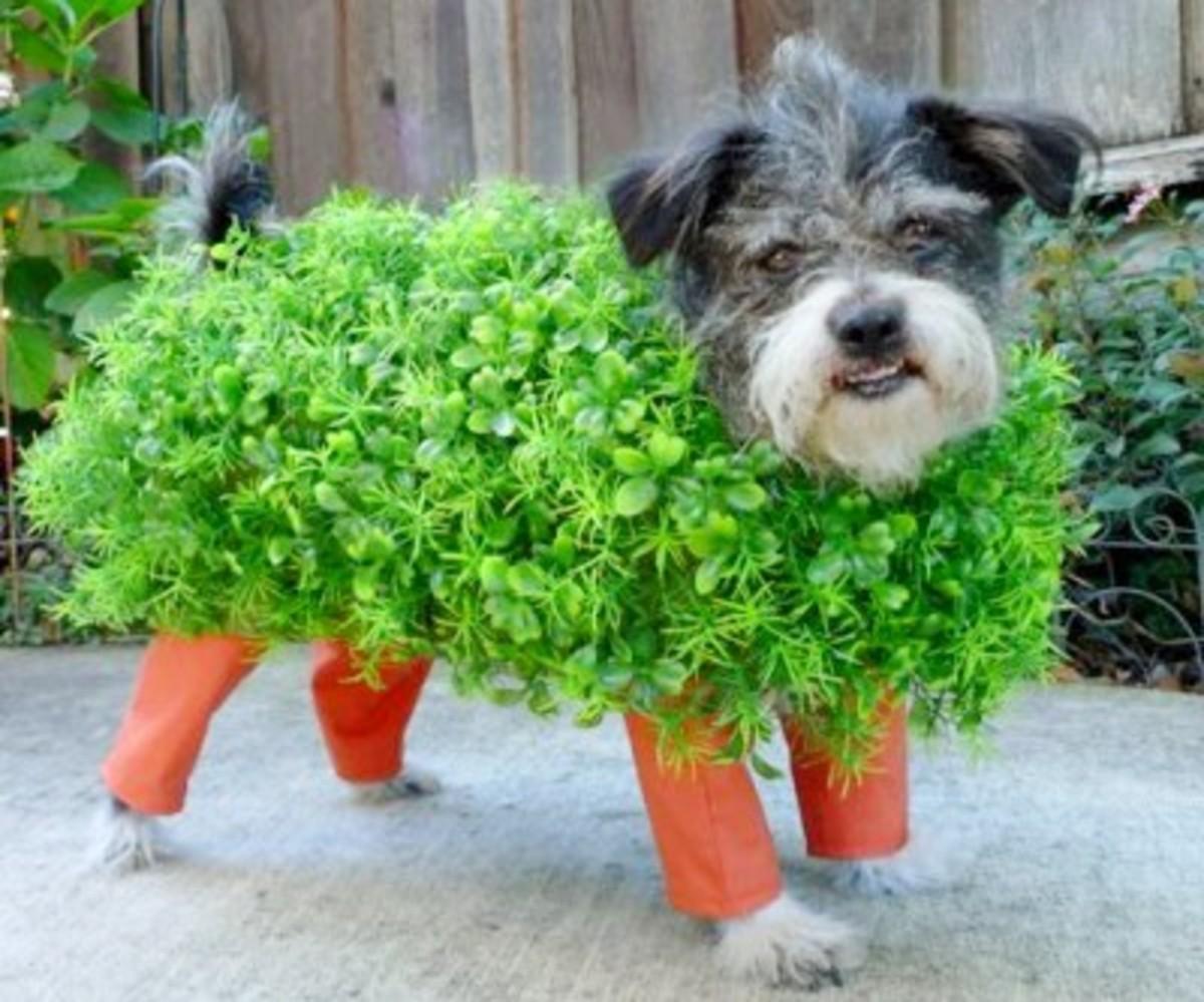 diy dog costumes chia pet