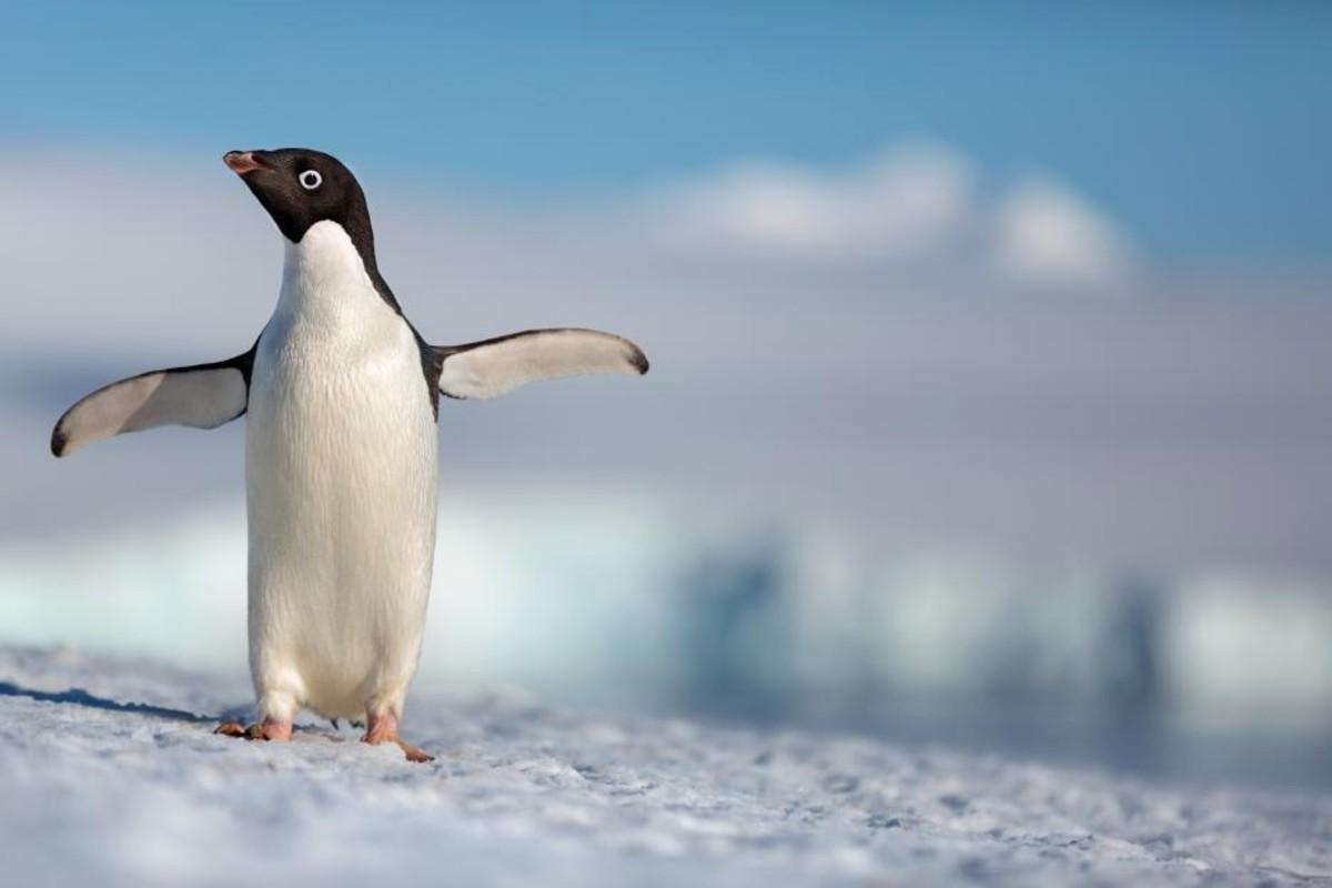 Penguins5adcb32204359